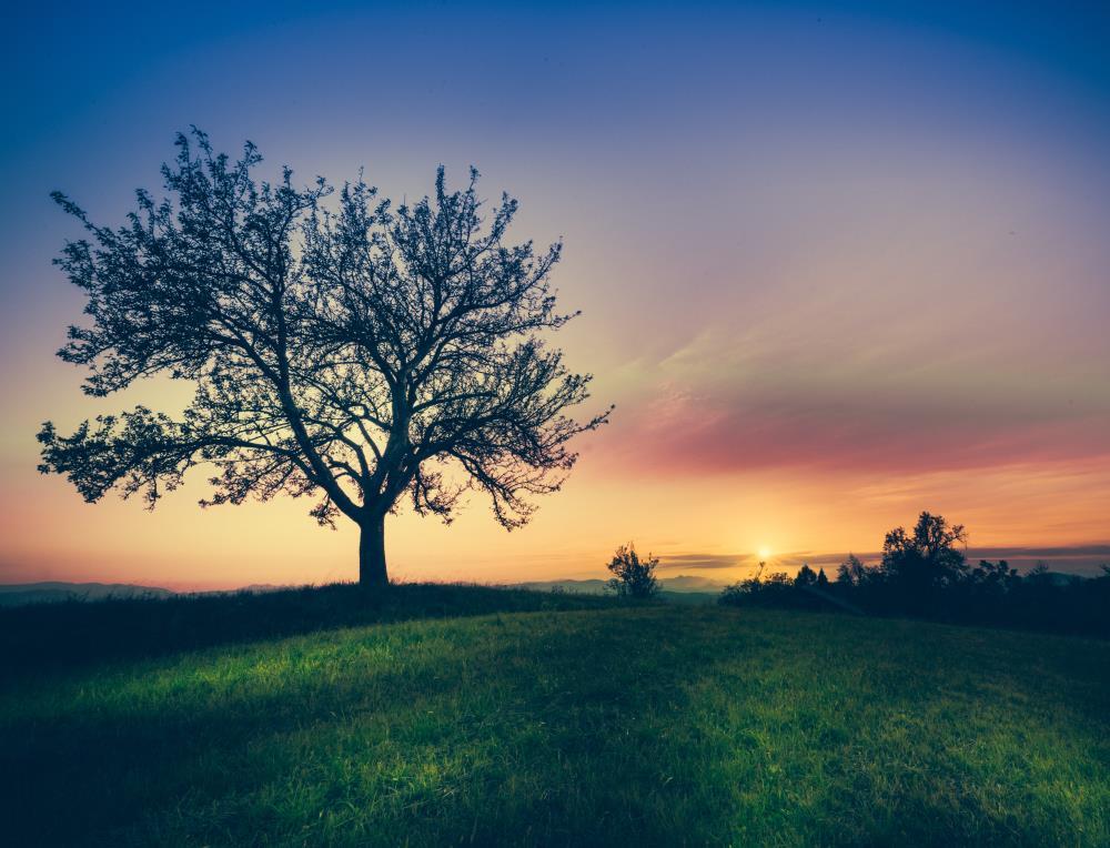 Дерево на фоне неба во время красочного заката