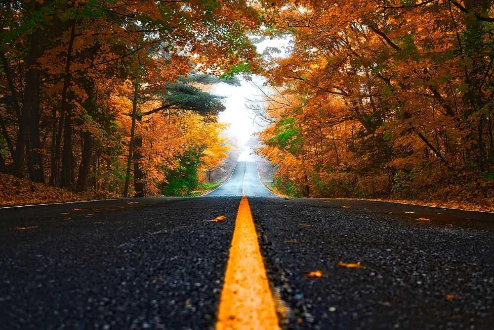 Дорога, окружённая осенними деревьями с ярко-оранжевой листвой