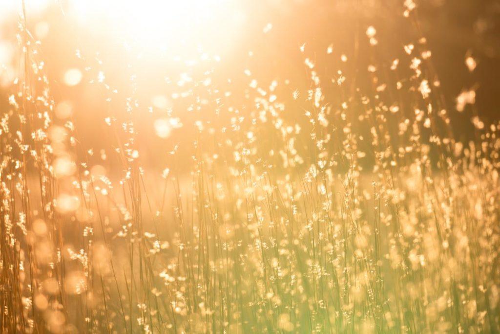 Трава на лугу, залитая ярким солнечным светом
