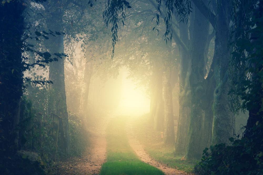 Яркий свет в конце дороги, ведущей через лес