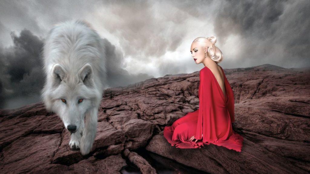 Дикий зверь, мягко ступающий рядом с сидящей красивой женщиной в красном платье
