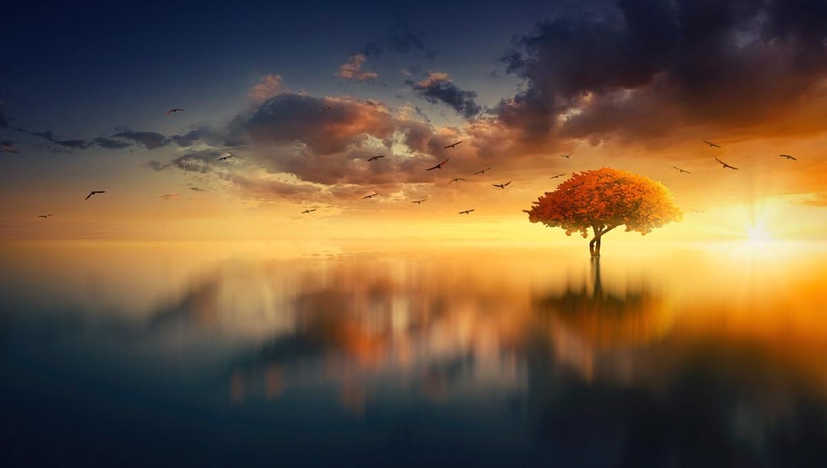 Умтротворяющий пейзаж: дерево посреди озера на фоне заката
