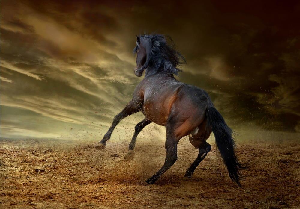 Дикая лошадь, встающая на дыбы