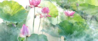Умиротворяющие, способствующие расслаблению мягкие цвета лотосов