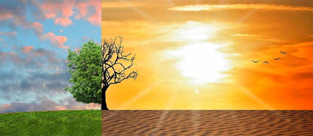Смена паттернов: выжженная пустыня покрывается зеленью