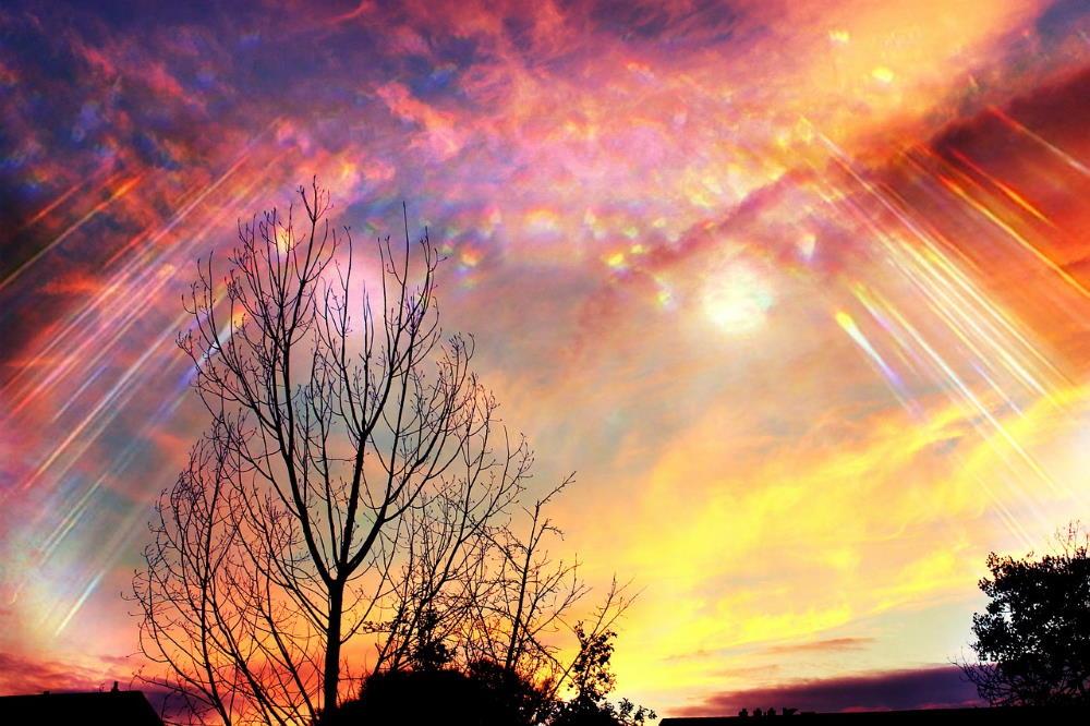 Яркие краски неба, озаряющие тёмные силуэты деревьев