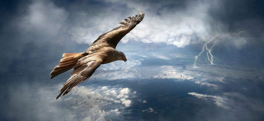 Орёл, парящий на воле