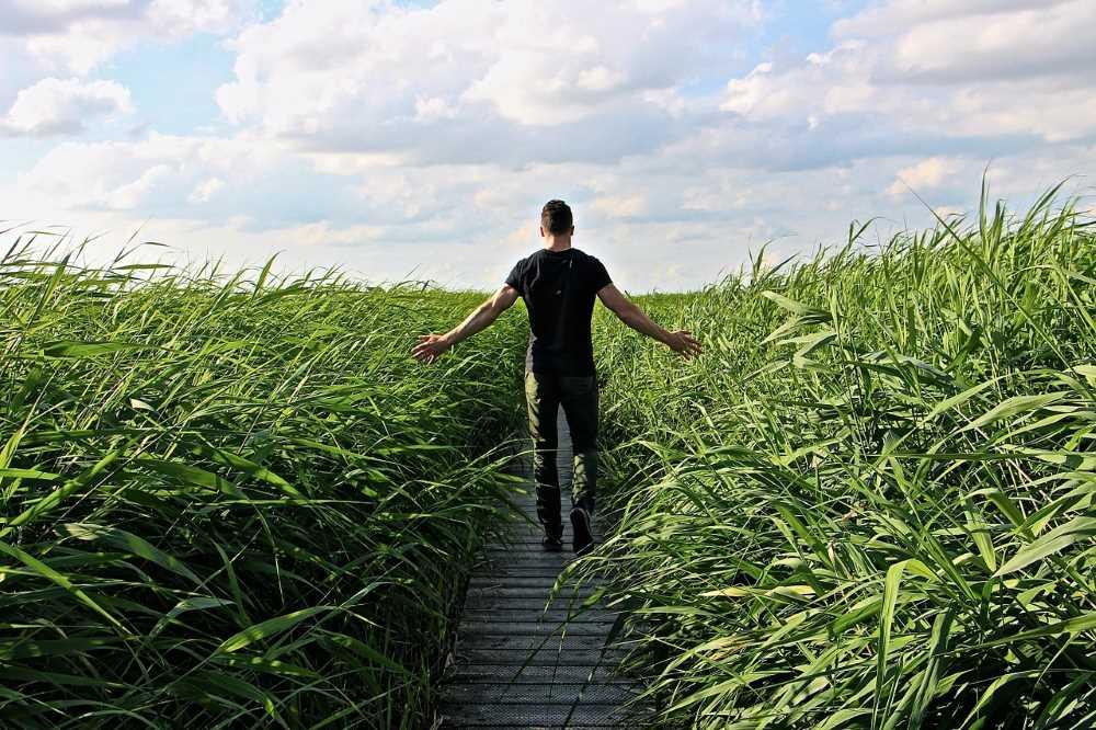 Мужчина заземляется в поле, прикасаясь к высокой траве